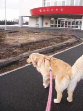 ココ 散歩 002