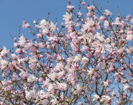 桜ココ 048