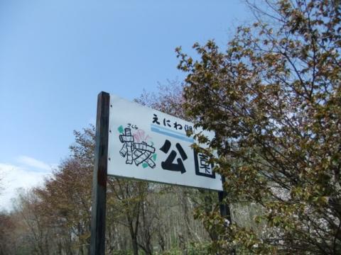 桜公園 136