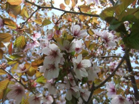 桜公園 130