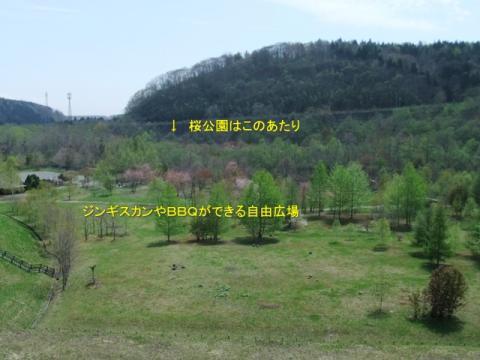 桜公園 157