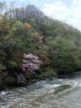 桜公園 210