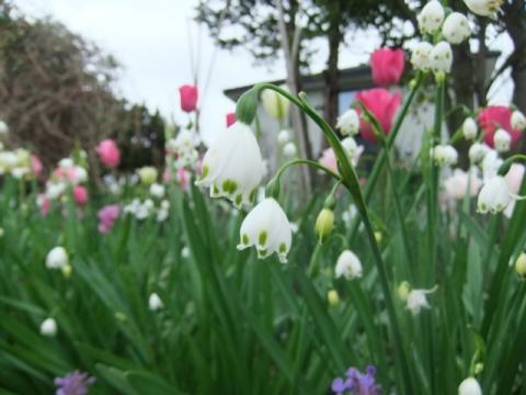 庭の花 003