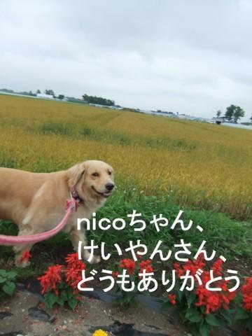 じとじと暑い日 091