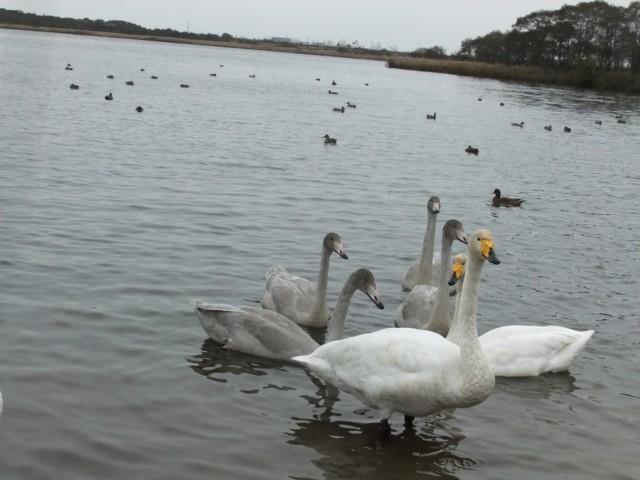 ウトナイ湖 028