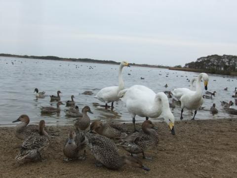 ウトナイ湖 007