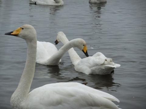 ウトナイ湖 206