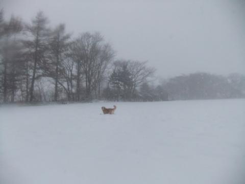 7 雪2 168