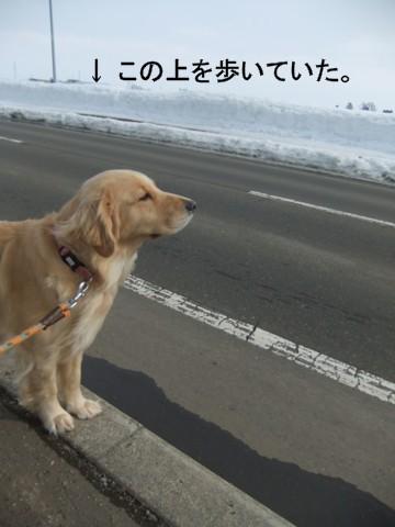 2011.02.24とり 087