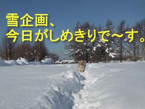 2011.02.03cc外 1520