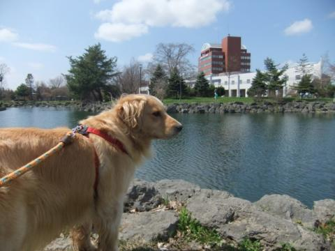 2011.5.5公園 033