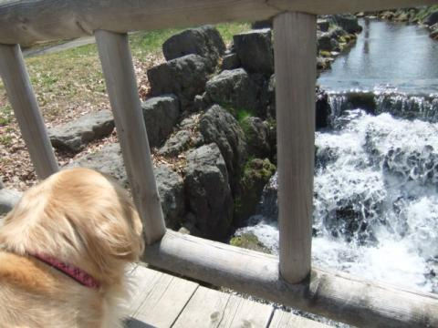 2011.5.5公園 054