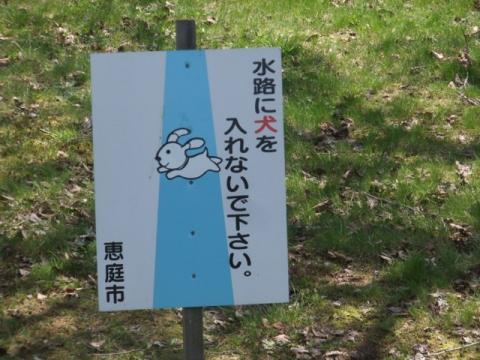 2011.05.15cc桜 006