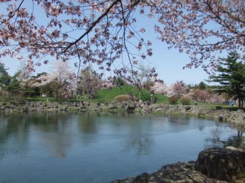 2011.05.15cc桜 036