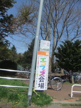 2011.05.15cc桜 126
