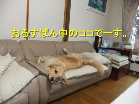 DSCF0540.jpg