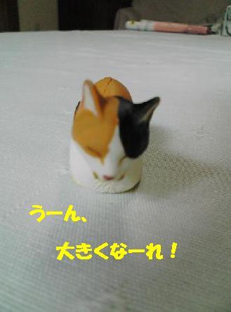 egg55.jpg