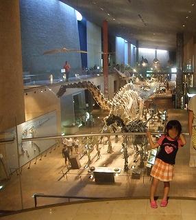 s-1009040078恐竜