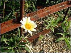 空に咲く花-06