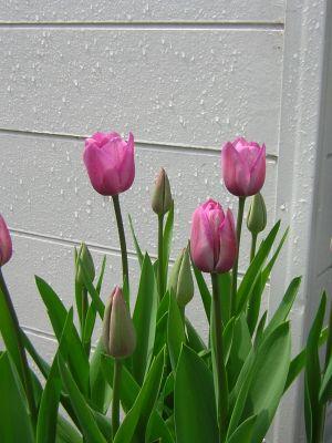 20060418-300-3