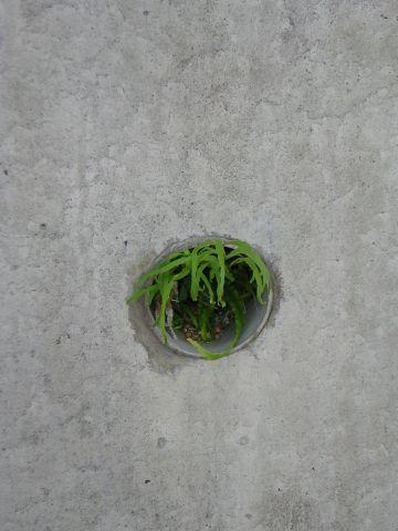 穴の中の蔦