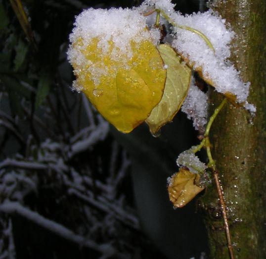 黄色い葉っぱと雪