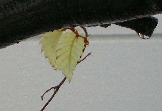 雪と葉っぱ