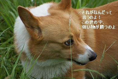 DSC01221.jpg