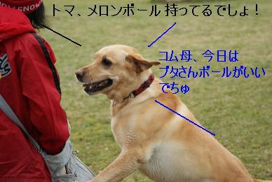 DSC09378.jpg