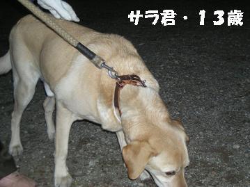 DSCN4294.jpg