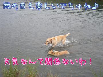 E_0vk_k6.jpg