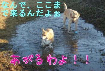 PIfWAJQ_.jpg