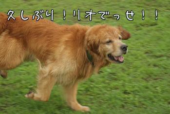 fvf1SQOb.jpg