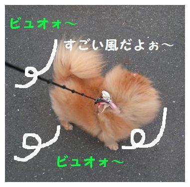 すごい風だよぉ~