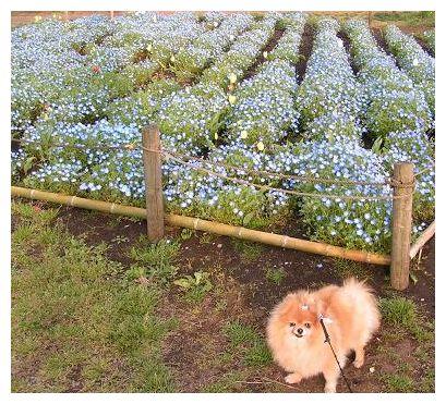 ブルーのお花♪