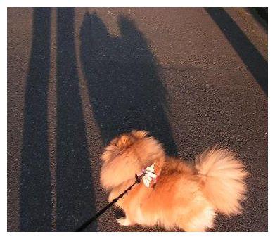 おっきいクゥの影~