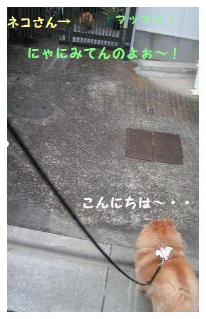 ネコさん♪