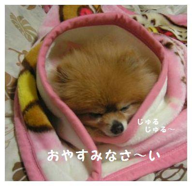 おやすみなさ~い♪