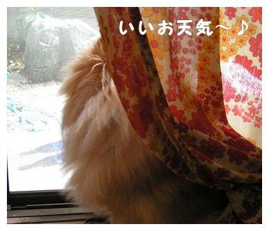 お天気~♪