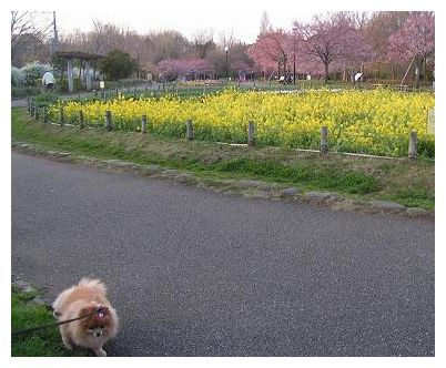 お花がいっぱい♪