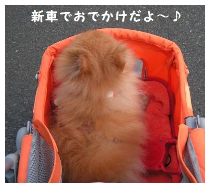 お出掛け~♪