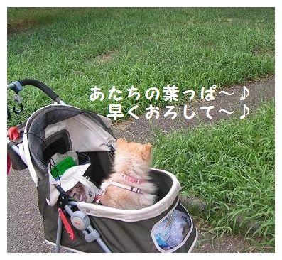 葉っぱみっけ~♪