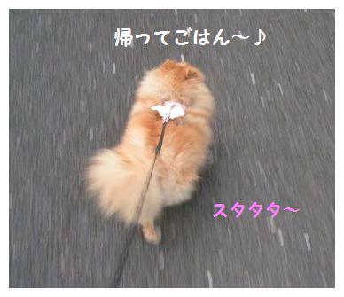 帰るよ~♪