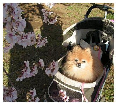 桜と~♪♪