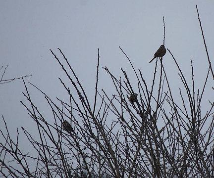 小鳥のシルエット