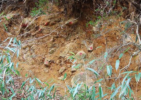 砂礫層の崖