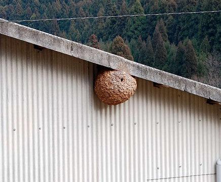 工場の蜂の巣
