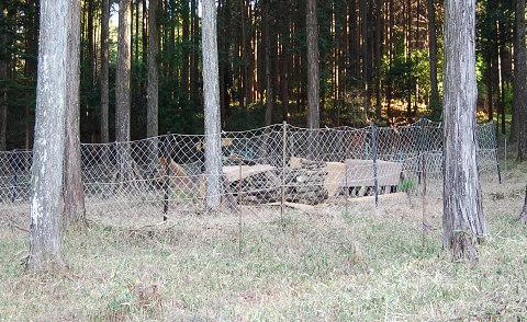 シイタケの鹿囲い