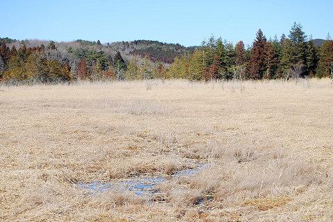 刈られた湿原2