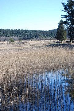 湿原の風景